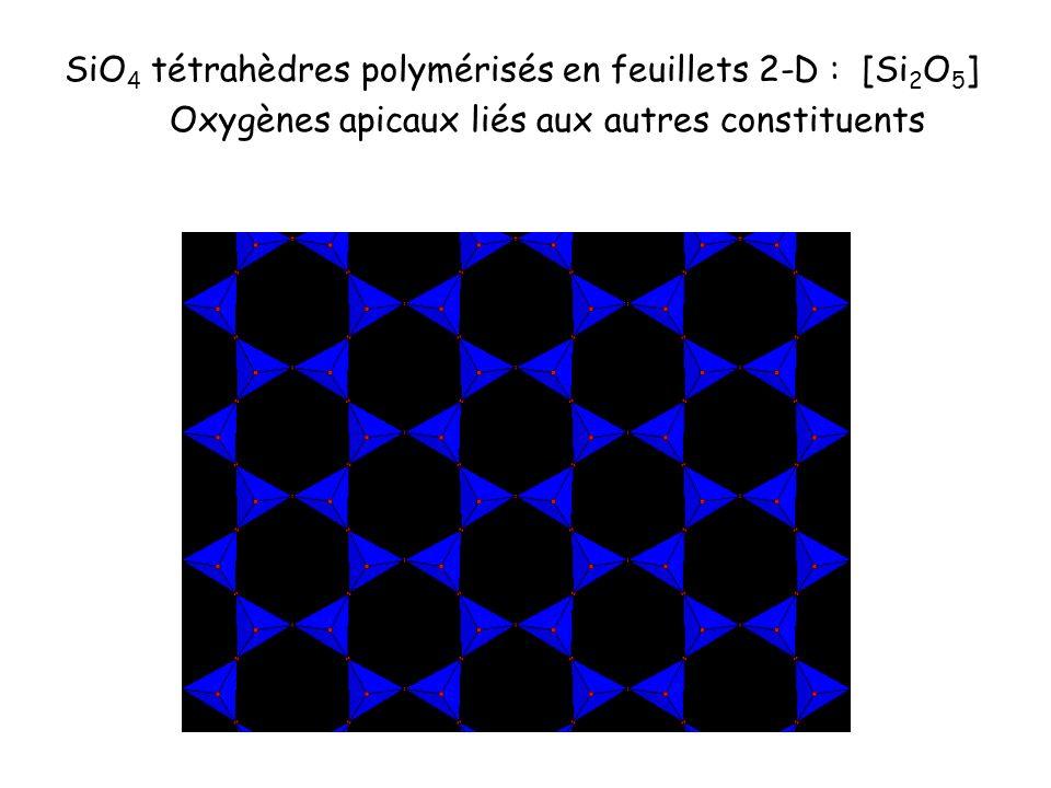 SiO4 tétrahèdres polymérisés en feuillets 2-D : [Si2O5]